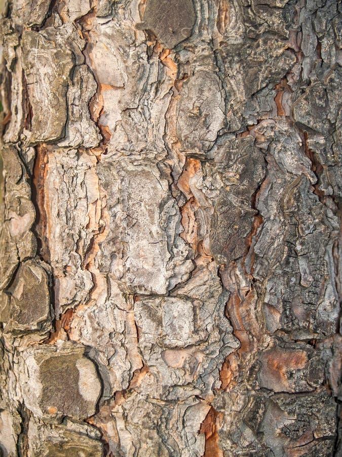 Natuurlijke textuur van boomstam van een boom royalty-vrije stock afbeelding