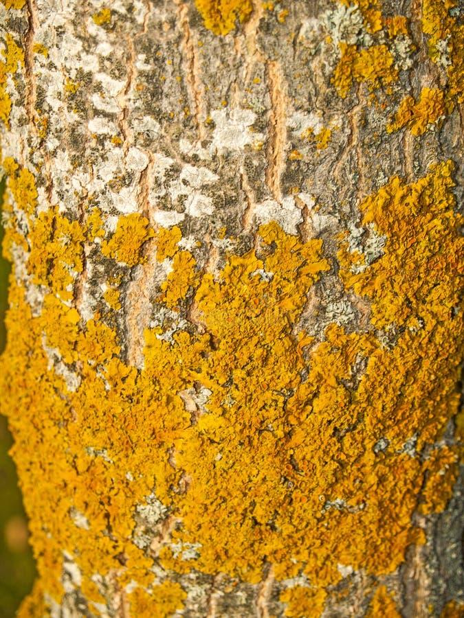Natuurlijke textuur van boomstam van een boom stock foto