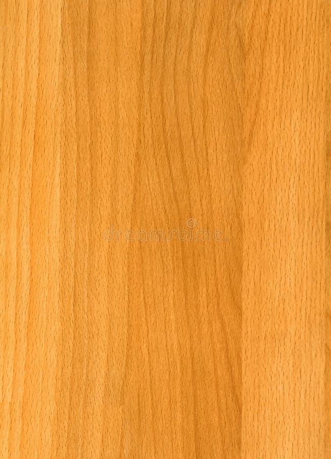 Natuurlijke textuur van de Beuk van de close-up de houten stock foto