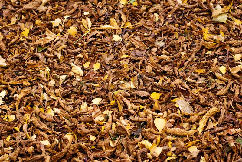Natuurlijke textuur van gevallen kastanjebladeren stock fotografie