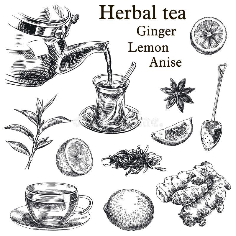 Natuurlijke thee, citroen, gember en steranijsplant vector illustratie