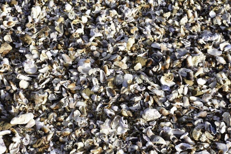 Natuurlijke Tropische Oostkust Verpletterde Shell Bed, Uvongo, Zuid-Afrika stock afbeeldingen