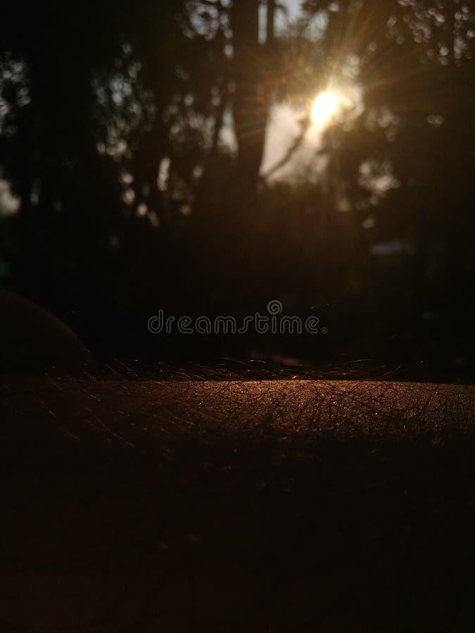 Natuurlijke warme zonnige goede gelukkige avond stock fotografie