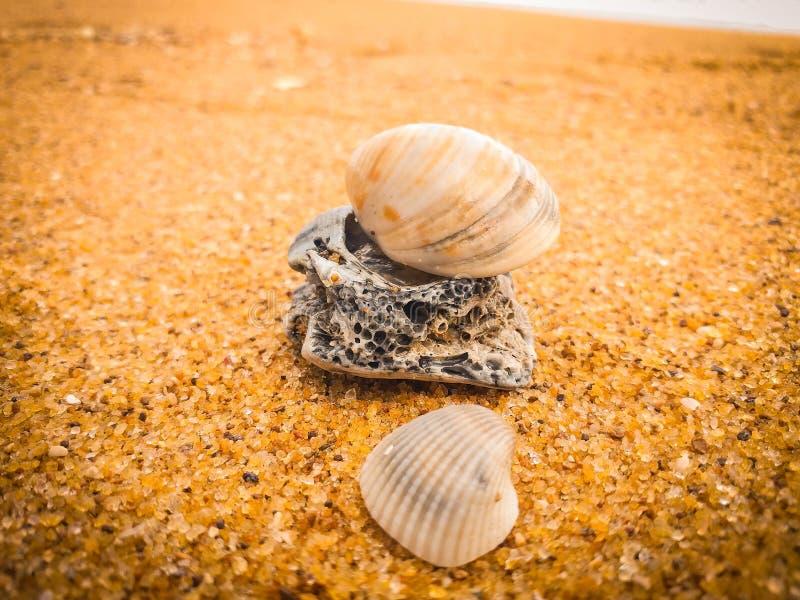 Natuurlijke zeeschelpen op het strand royalty-vrije stock foto's