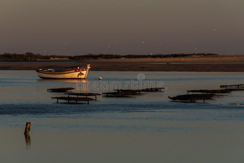 Natuurreservaat Ria Formosa - Algarve - Portugal stock fotografie