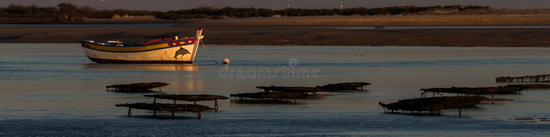 Natuurreservaat Ria Formosa - Algarve - Portugal royalty-vrije stock foto's