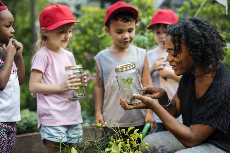 Nauczyciel i dzieciaki uczymy kogoś uczenie ekologii ogrodnictwo obraz stock