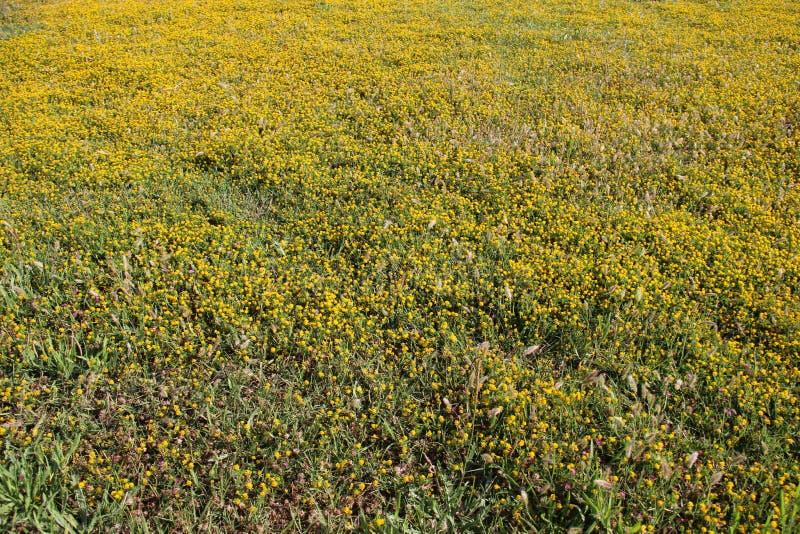 naughty Bloeiende wilde bloemen stock afbeeldingen