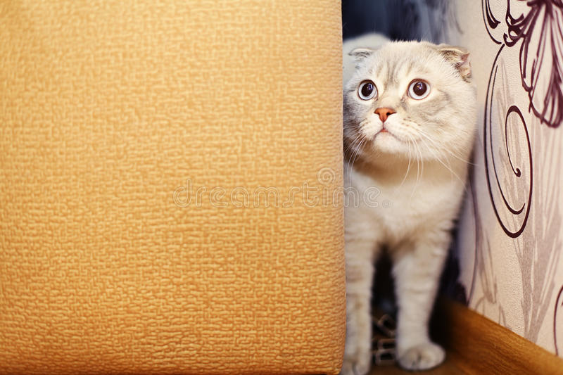 Naughty Cat Peeking Out From Behind The Sofa Stock