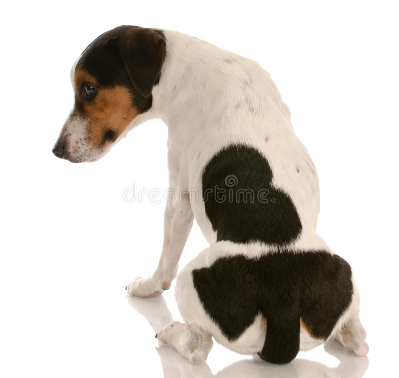 Naughty dog stock photo