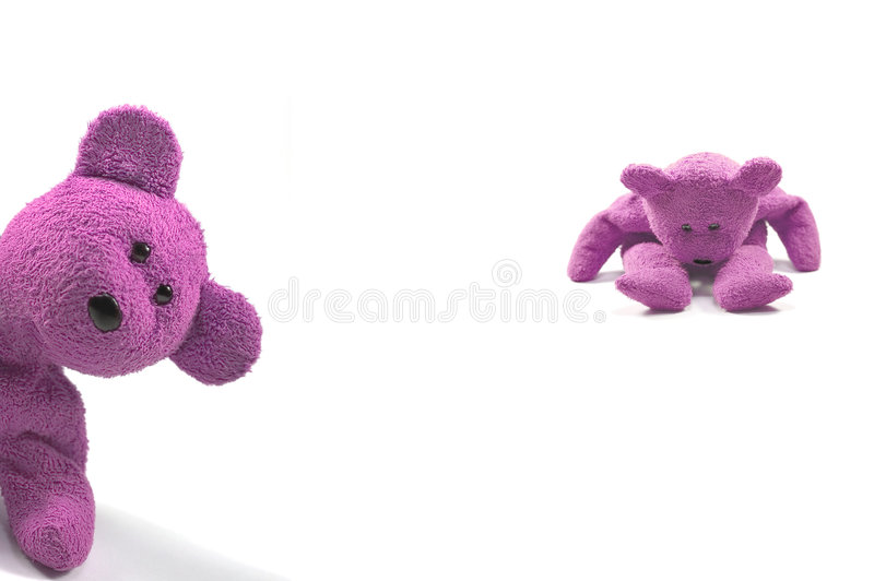 Naughty girl bears. Two bears looking naughty against a white background royalty free stock images