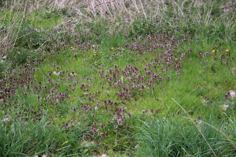naughty Groene en Verse Jonge planten met Wilde Bloemen stock afbeelding