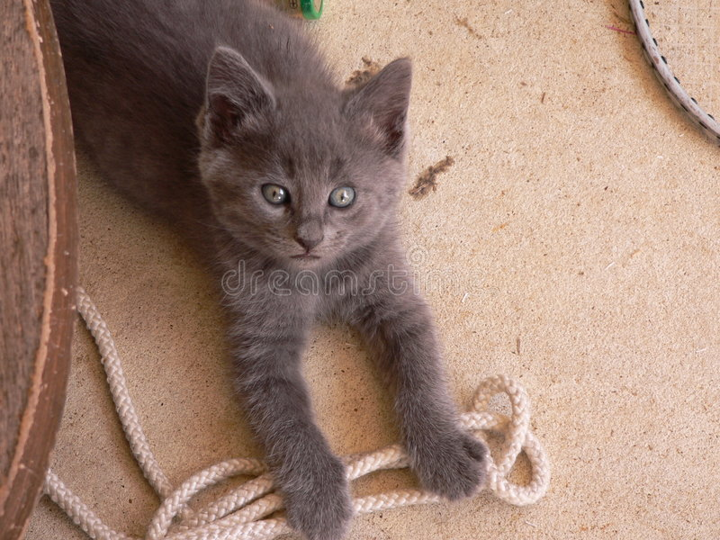 Naughty Kitty stock photos