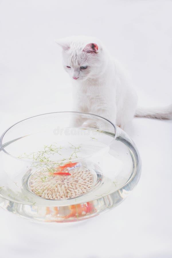 Naughty little cat stock image