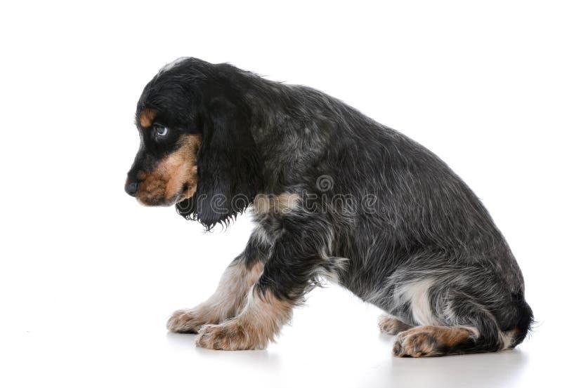 Naughty puppy stock image