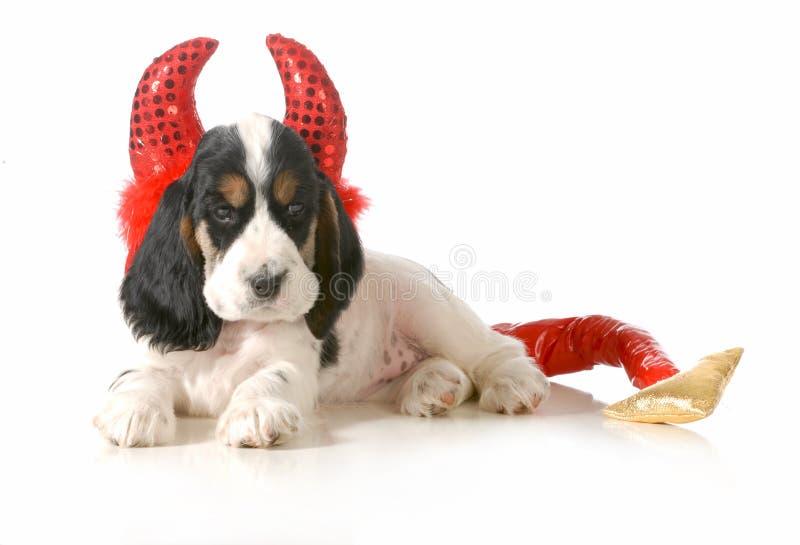 Naughty puppy royalty free stock photo