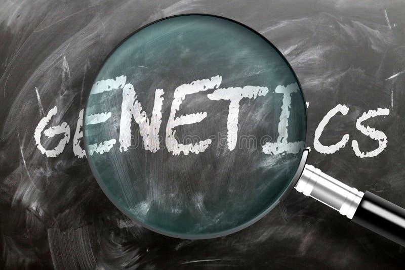 Nauka, badanie i kontrola genetyki - przedstawiana jako szkło powiększające słowo genetyka, symbolizuje badania, badanie i zdjęcie royalty free