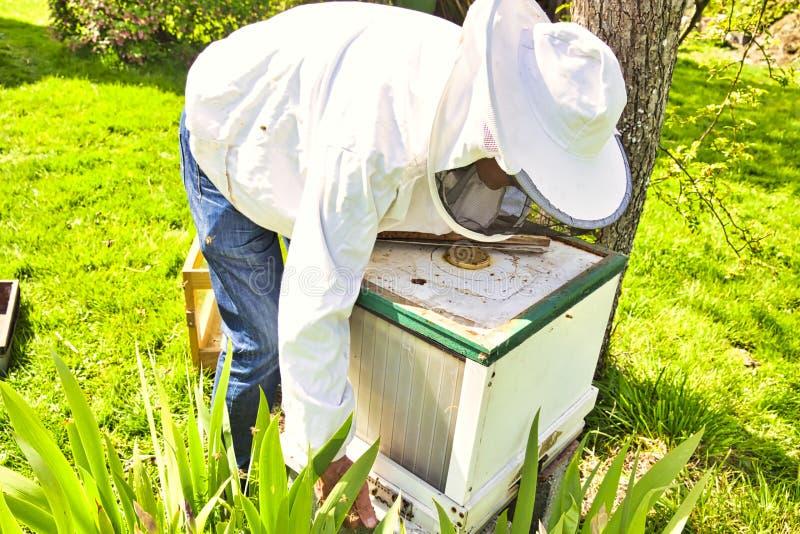 Nauka pszczo?y zna jako melittology Ten pszczelarka jest gotowa sprawdza? na pszczo?a roju podczas gdy b?d?cy ubranym ochronn? od zdjęcia royalty free