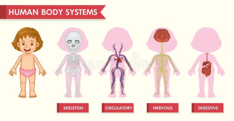 Naukowa medyczna ilustracja dziewczyna ludzcy systemy ilustracja wektor