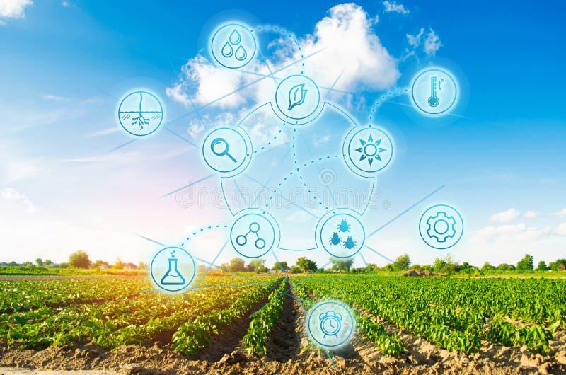 Naukowa praca, wybór, uprawy prognozowanie i warunek analiza, Nowożytny Uprawiać ziemię pole warzywa na słonecznym dniu świeży fotografia stock