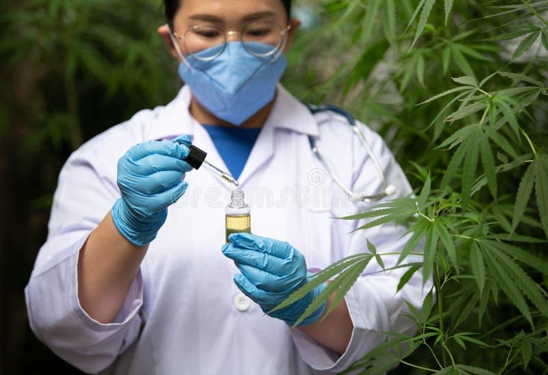 Naukowcy z rękawicami badającymi rośliny w szklarni Koncepcja medycyny alternatywnej, oleju cbd, przemysłu farmaceutycznego zdjęcie royalty free