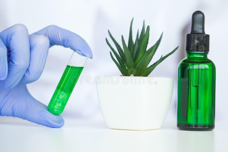 Naukowiec, dermatolog robi organicznie naturalnemu zielarskiemu cosmet zdjęcie stock