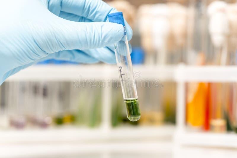Naukowiec dotyka trzymający szklanej próbnej tubki w laboratorium badawczym fotografia royalty free