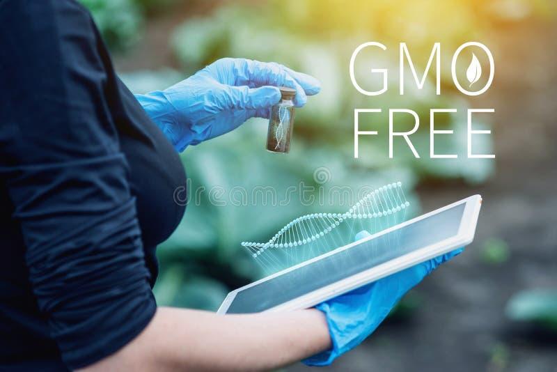 Naukowiec kobieta bada rośliny dla obecności genetyczna modyfikacja bezpłatni organizmy i produkty zdjęcie stock
