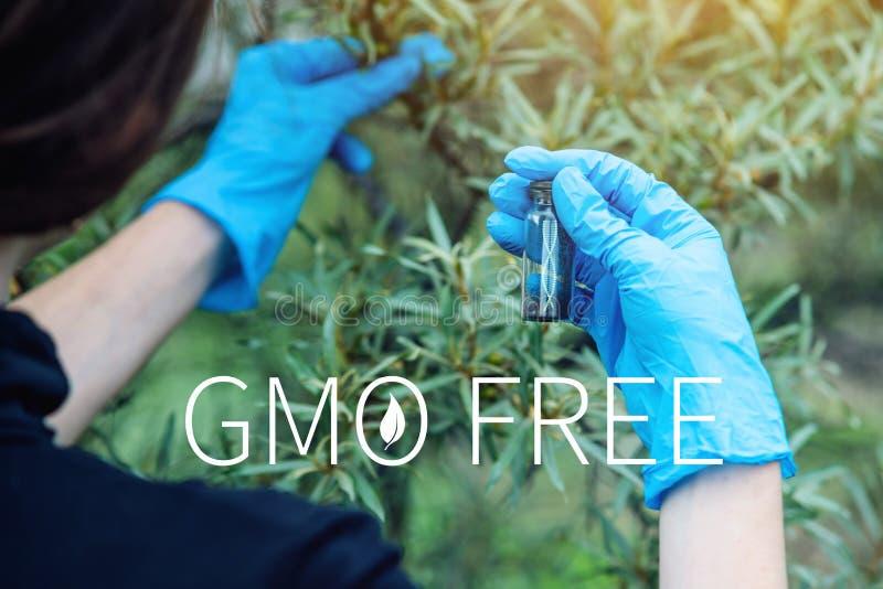 Naukowiec kobieta bada rośliny dla obecności genetyczna modyfikacja bezpłatni organizmy i produkty fotografia royalty free