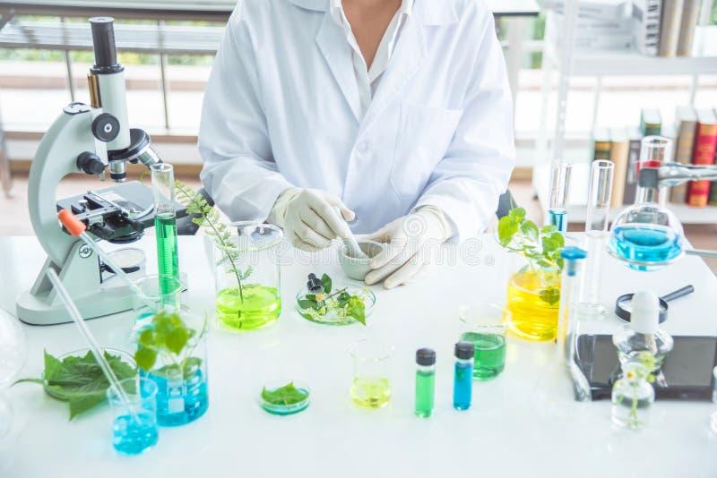 Naukowiec robi ziołowej medycynie od ziele w laboratorium zdjęcie royalty free