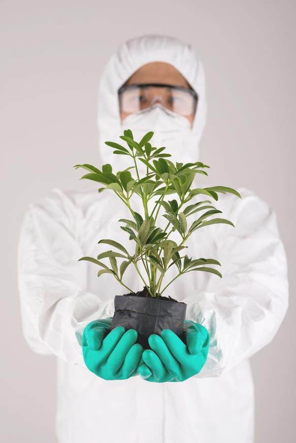 Naukowiec z rośliną fotografia stock