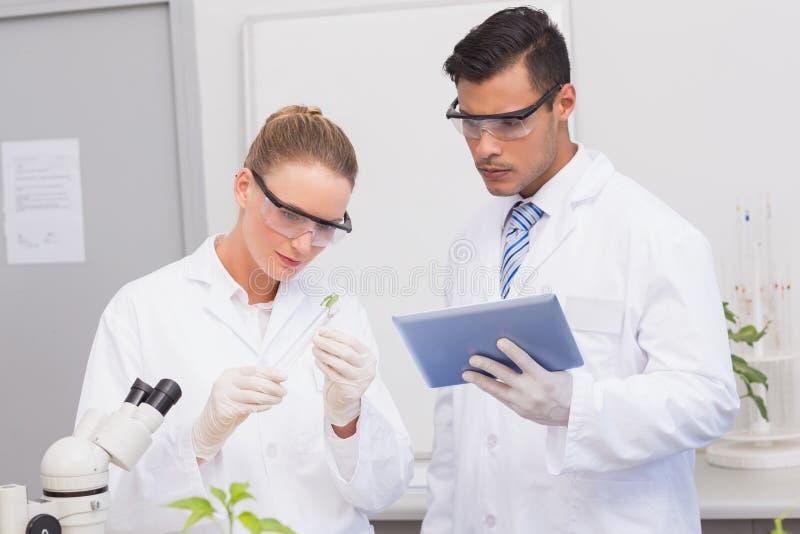 Naukowowie egzamininuje liść rośliny zdjęcia stock