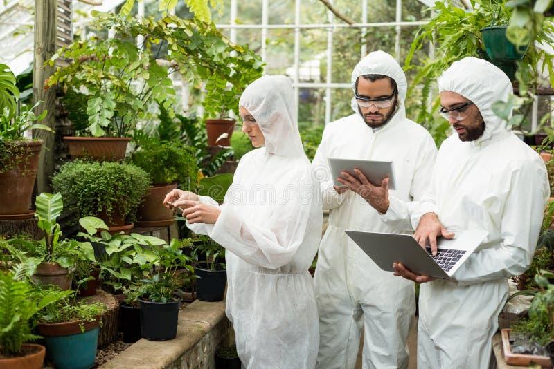 Naukowowie używa technologie podczas gdy egzamininujący roślinę zdjęcie royalty free