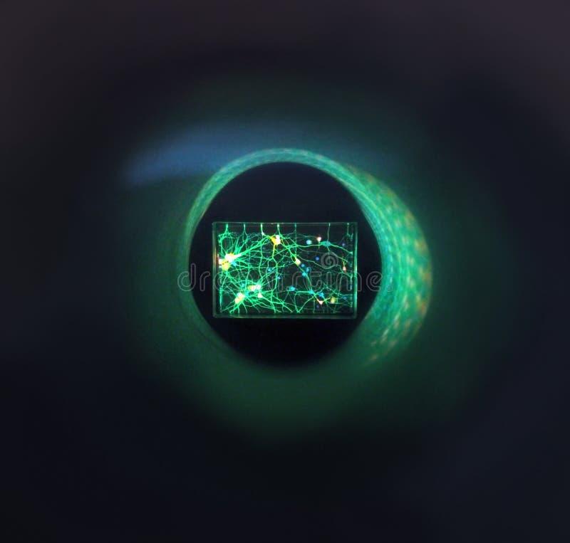 Naukowy ciemny tło z kolorów gradientami, szkło pod mikroskopem obraz royalty free