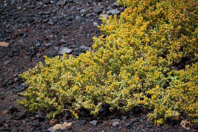 Naukowy imię ten roślina jest zdjęcie royalty free