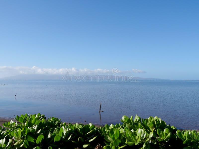 Naupaka Bush und Küstenlinie auf Molokai stockbilder