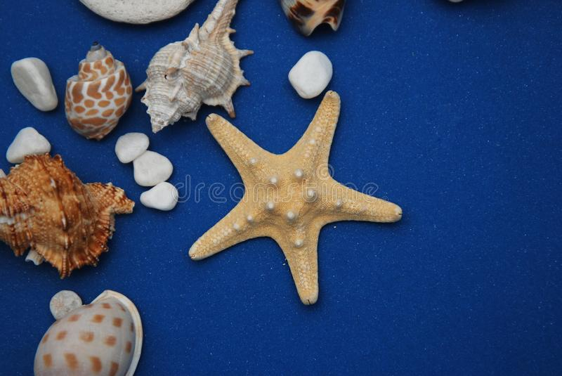 Nautical, Marrine concept. Starfish with Shell against a Blue background with copy Space. Summer Holliday. royalty free stock photography