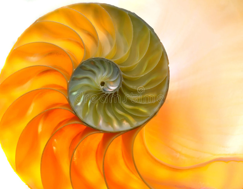Nautilaus Shell 2 royalty free stock photo