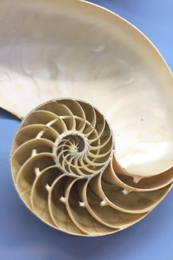 nautilus ανασκόπησης στοκ εικόνα με δικαίωμα ελεύθερης χρήσης