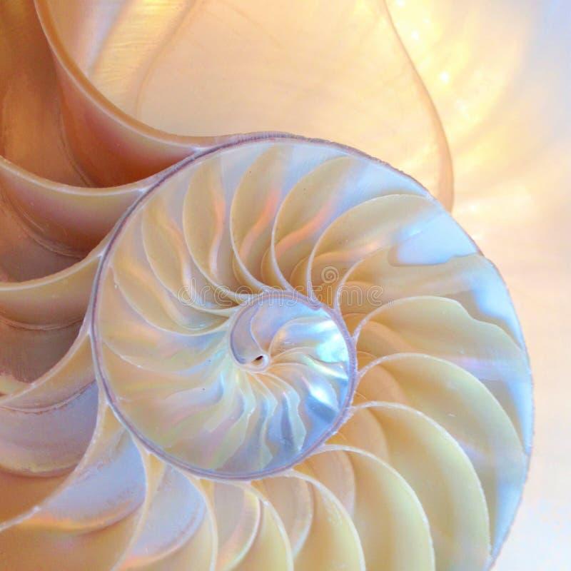 Nautilus раковины симметрии Фибоначчи половинной поперечного сечения спирали золотой коэффициента структуры роста конца мать ввер стоковые фото