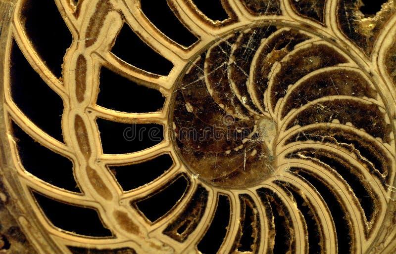 Nautilus stock photos