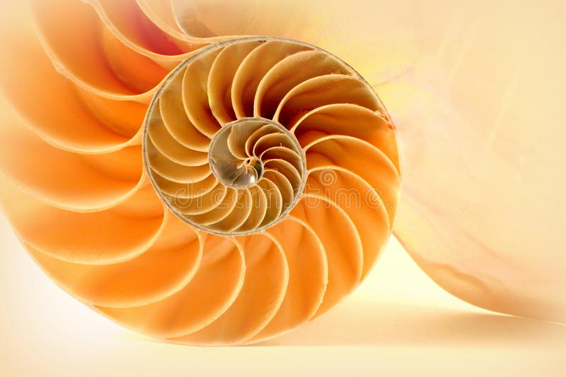 Nautilus стоковое фото rf