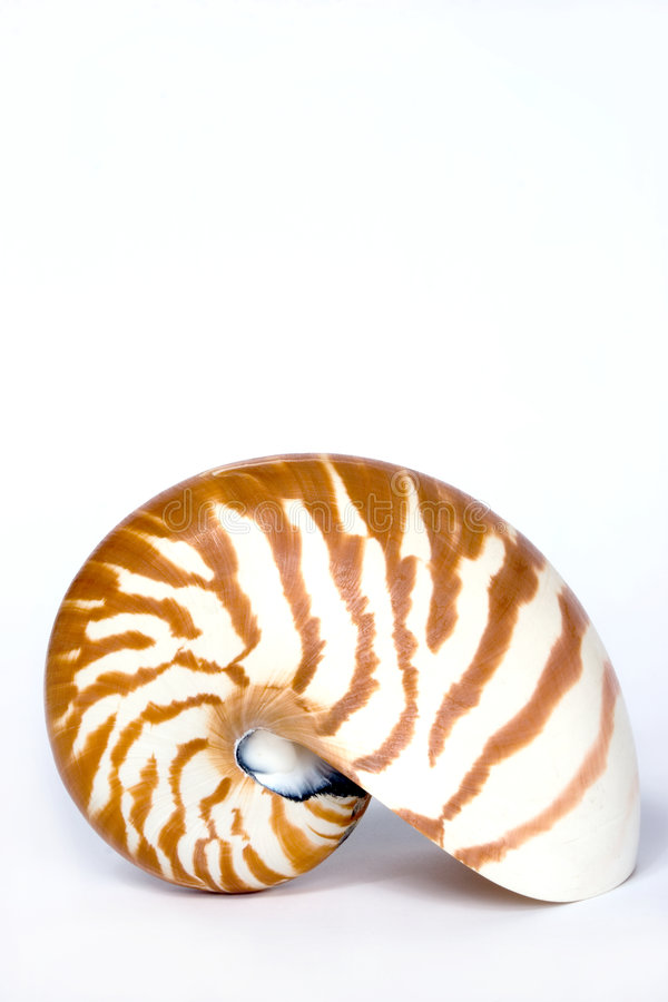 Nautilus royalty-vrije stock foto