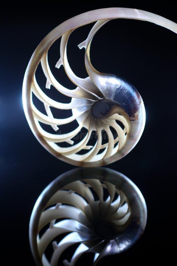 Free Nautilus Stock Images - 6732954