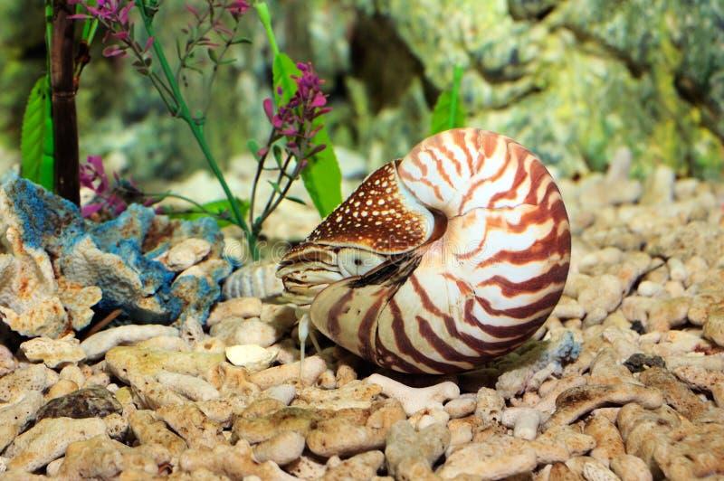 Nautilus stockfotografie
