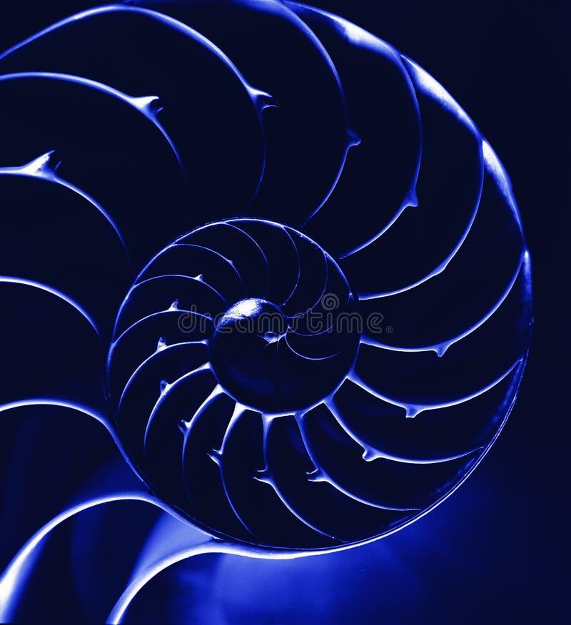 Download Nautilus azul, close up foto de stock. Imagem de geom - 12809832
