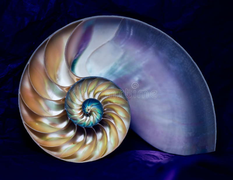Nautilus BB116548 стоковое изображение rf