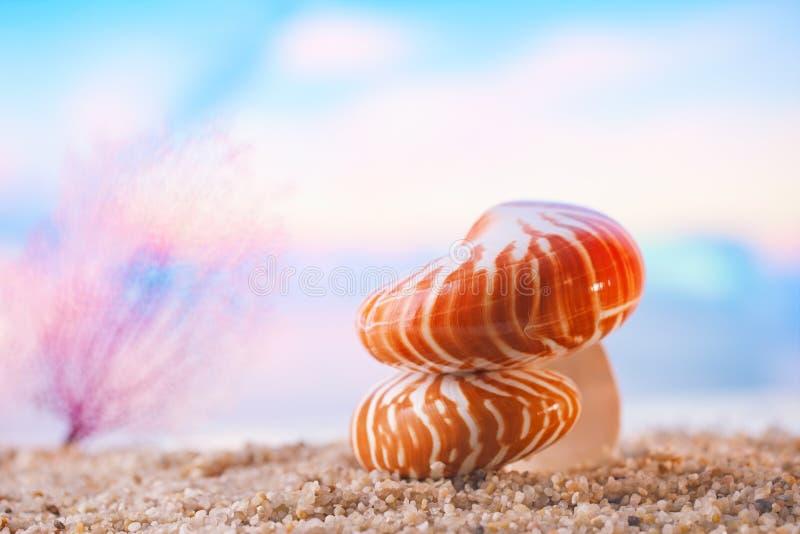 Nautilus concha marítima de concha foto de stock royalty free