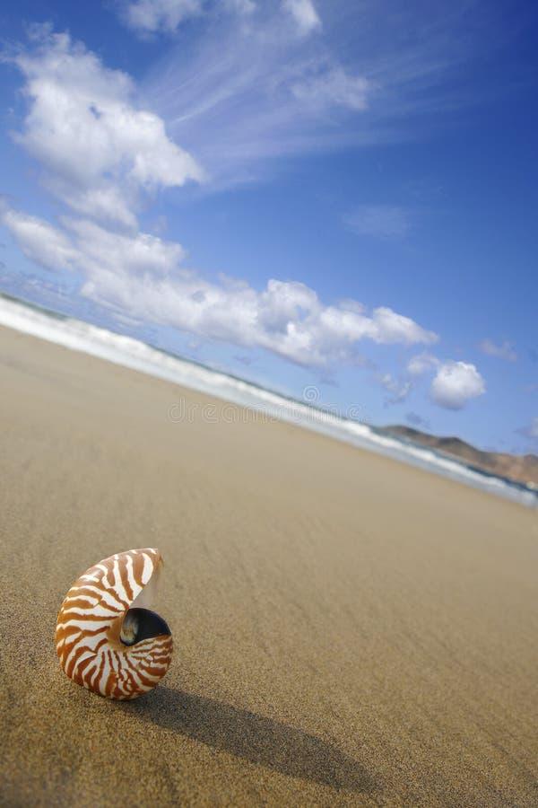 Nautilus de la playa fotografía de archivo
