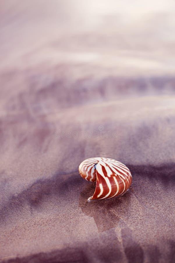 Nautilus della conchiglia sulla spiaggia del mare con le onde nell'ambito della luce del sole di alba immagini stock